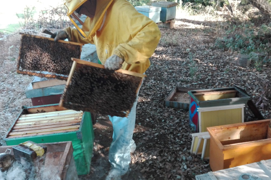 Produzione sciami artificiali Calabria