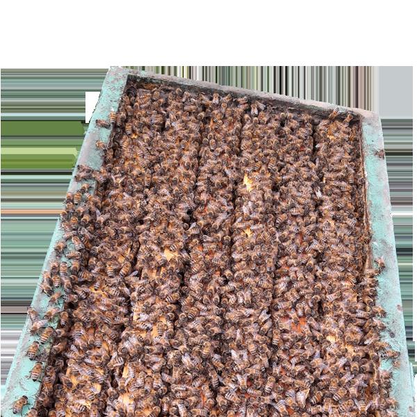 Produzione e vendita sciami artificiali Calabria